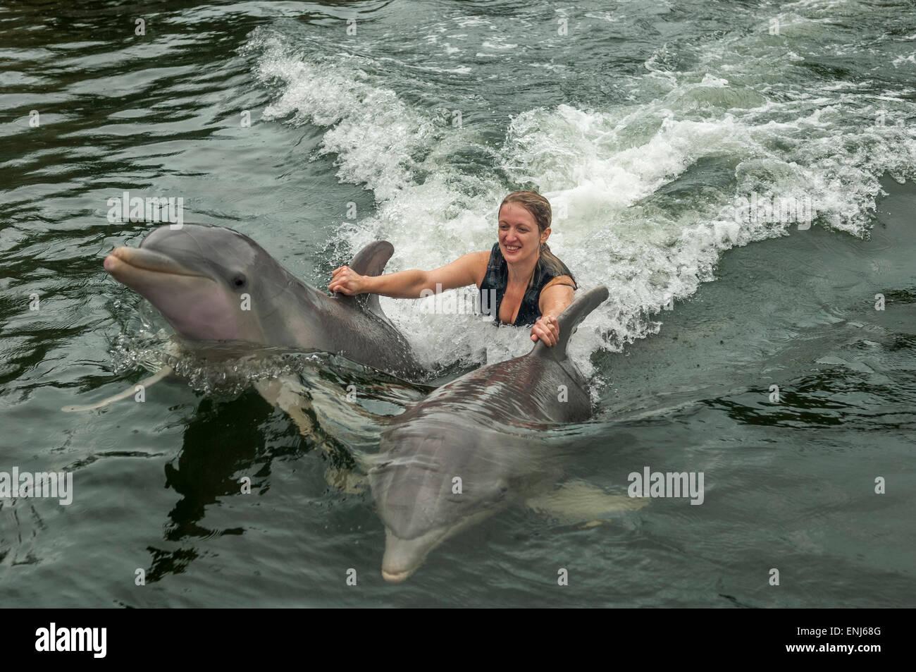 Nuotare con i delfini a delfini Plus, un dolphin research & interaction center in Key Largo, FL. Stati Uniti Immagini Stock