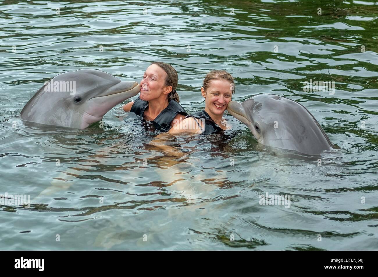 Nuotare con i delfini a delfini Plus Bayside, un dolphin research & interaction center in Key Largo, FL. Stati Immagini Stock
