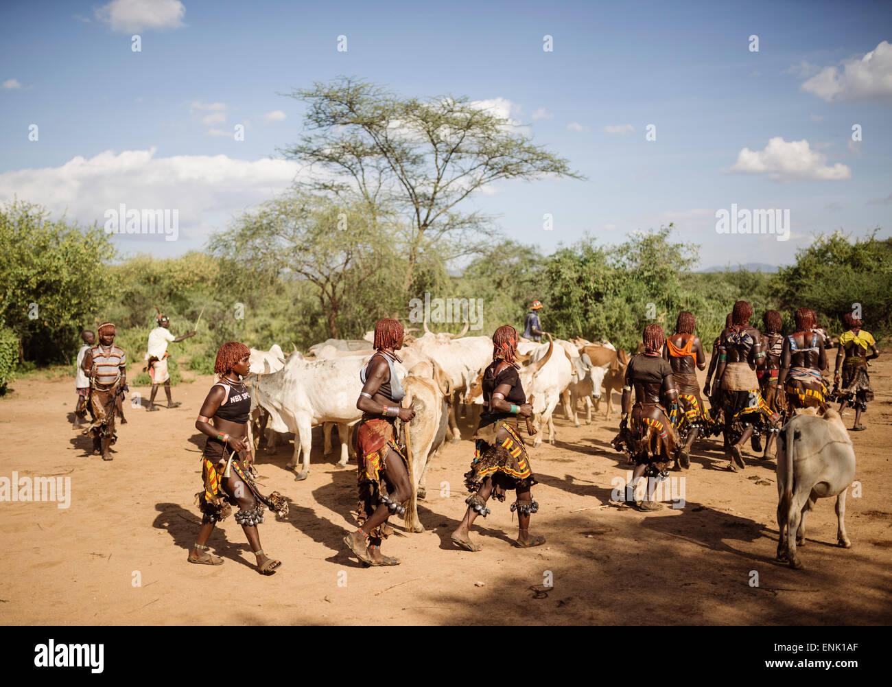 Il salto dei tori cerimonia, Hamar tribù, Turmi, Valle dell'Omo, Etiopia, Africa Immagini Stock