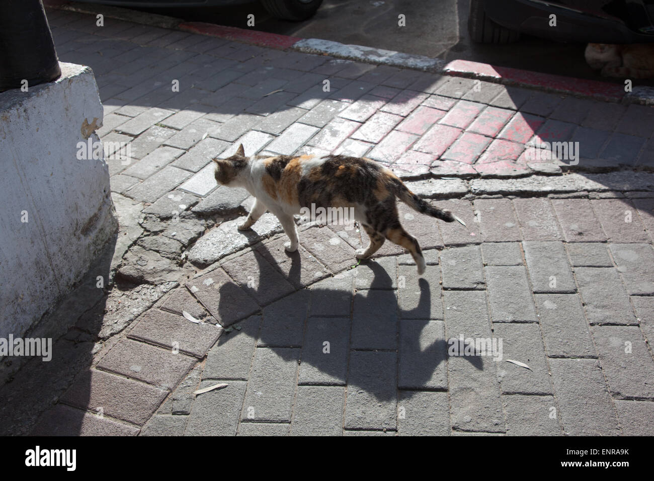 Cat a piedi con sihouette Immagini Stock