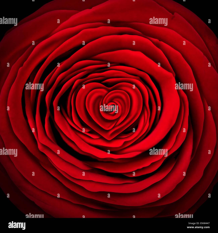 Amore rose nozione come un fiore rosso design sagomato come un cerchio con una forma di cuore all'interno come Immagini Stock