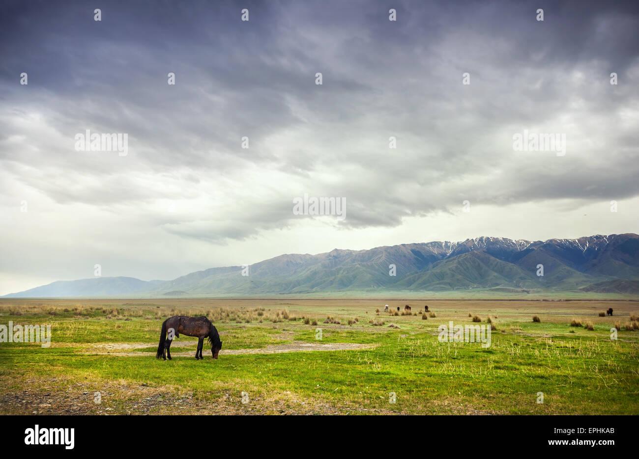 Cavallo in montagna in drammatico cielo nuvoloso vicino lago Alakol in Kazakistan e in Asia centrale Foto Stock