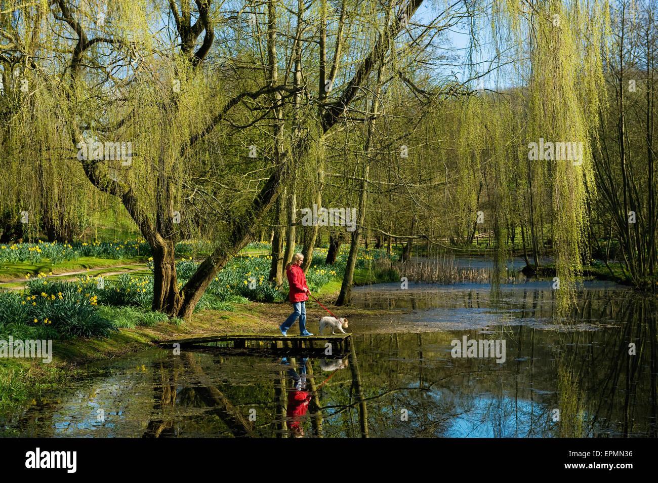 Una donna e cane su un molo su un lago, sotto un grande salice piangente albero. Immagini Stock