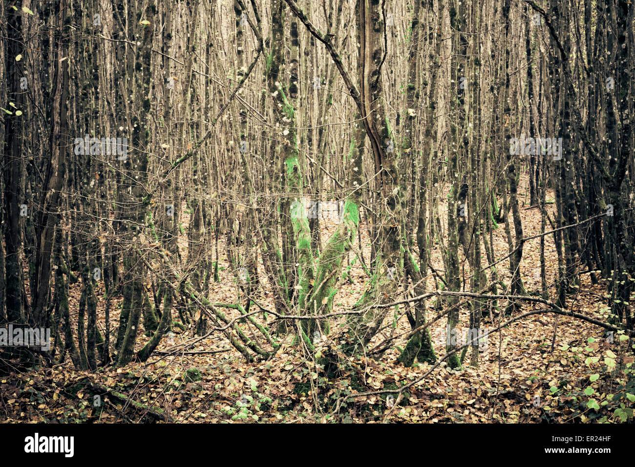 Albero gli alberi della foresta di legno Immagini Stock