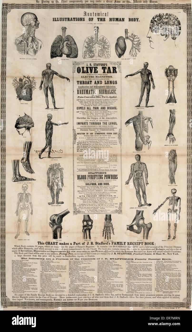 Anatomici, illustrazioni del corpo umano. Data 1857 Distretto Meridionale di N.Y. Immagini Stock