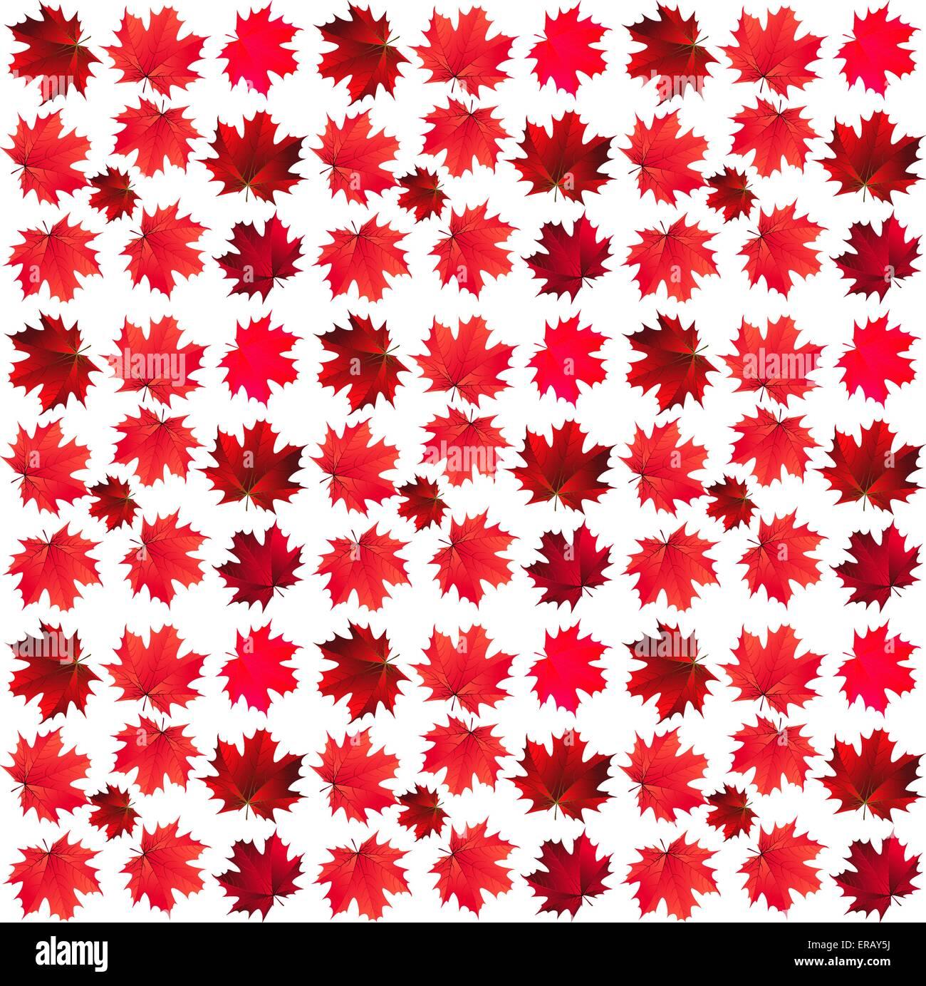 Modello di aceri rossi Immagini Stock