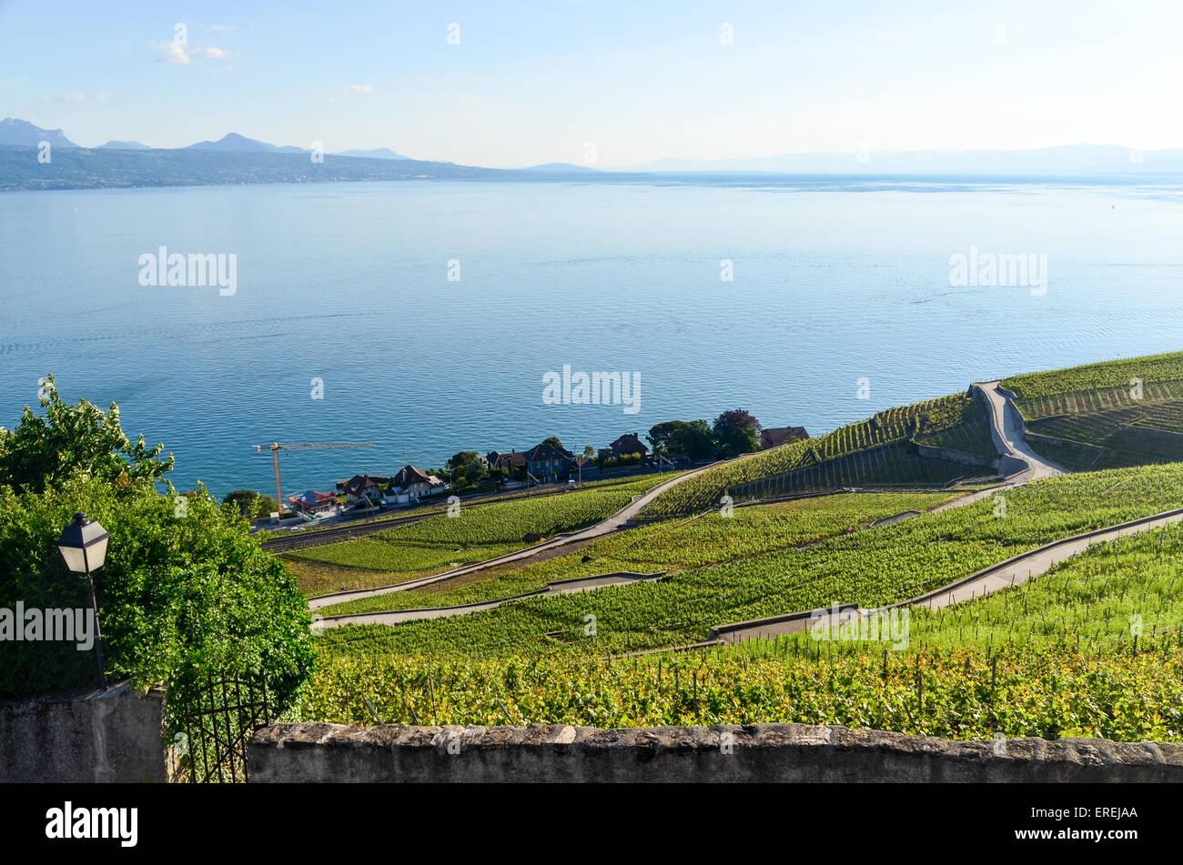 I Vigneti del Lavaux, Svizzera, dal Lago di Ginevra. La Francia è sulla riva del lago di fronte. Immagini Stock
