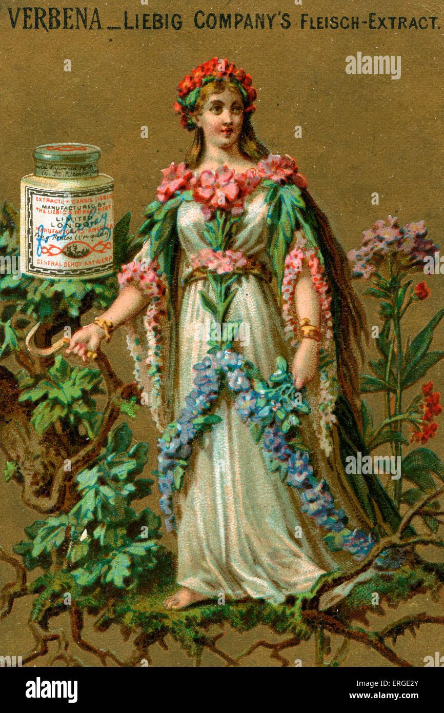 Verbena. Signora giovane adornata con verbena. Essa si erge su di un ramo. Scheda di Liebig serie (1888). Immagini Stock