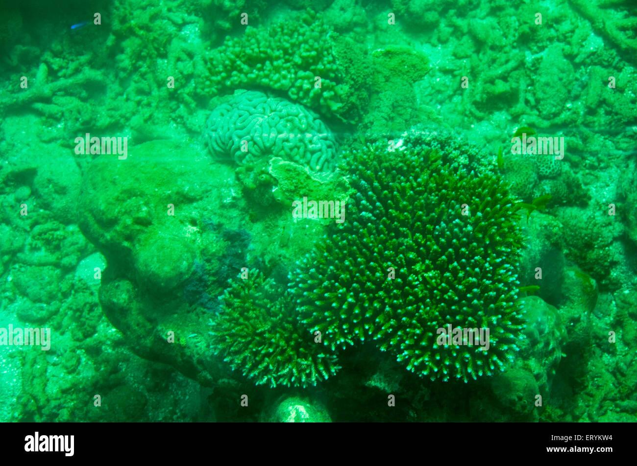 Coralli marini isopora curcaoensis e coralli molli a coral for Immagini coralli marini