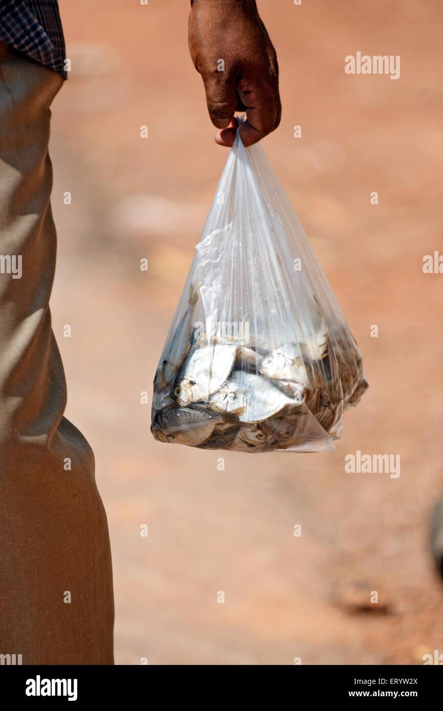 L uomo si porta il pesce Panji ; Goa ; India Immagini Stock