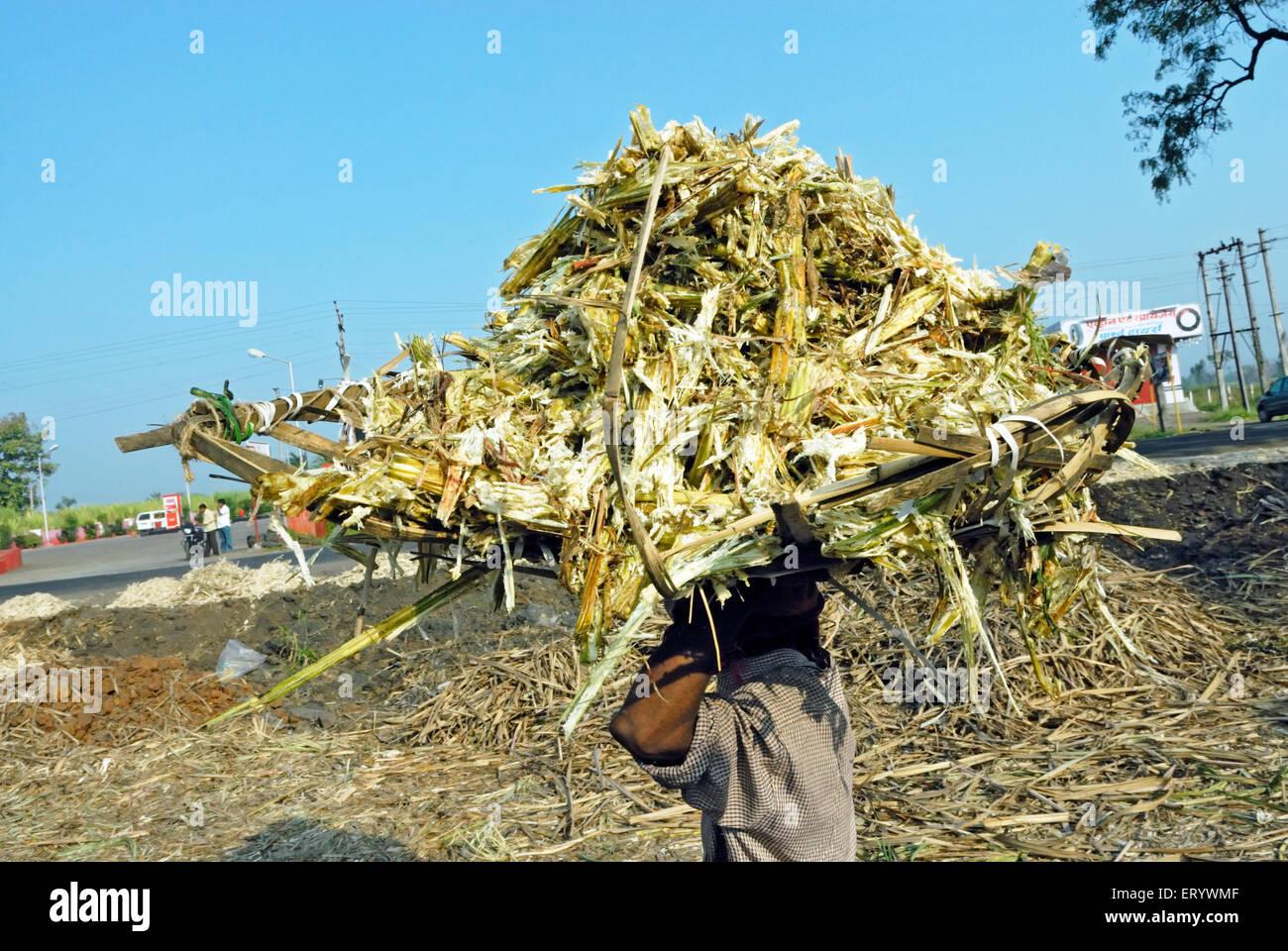 Cestino di canna da zucchero ; Kolhapur ; Maharashtra ; India Immagini Stock