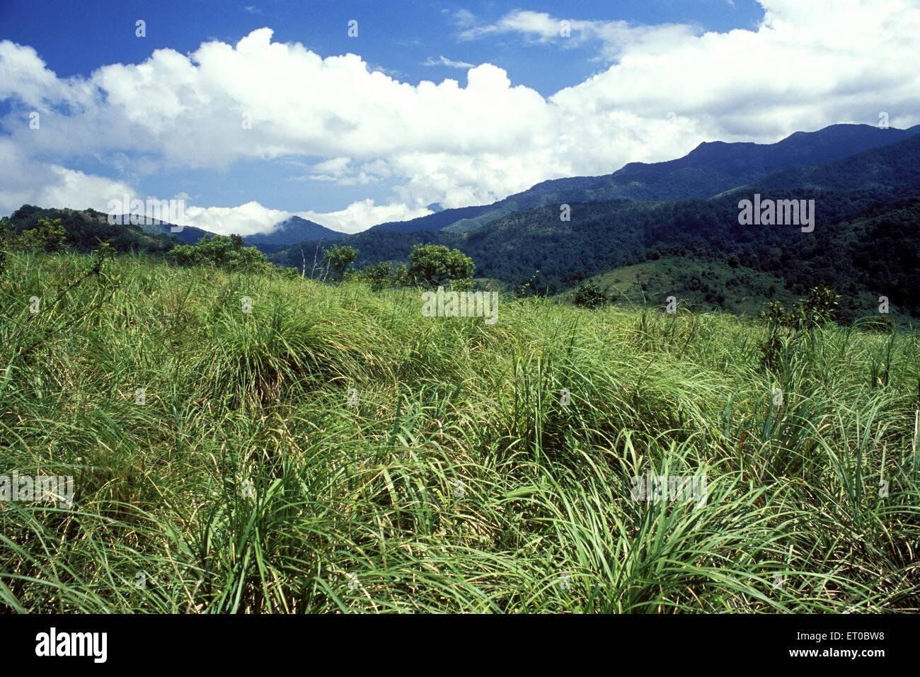 Silent Valley National Park ; il Kerala foresta pluviale tropicale ; India Immagini Stock