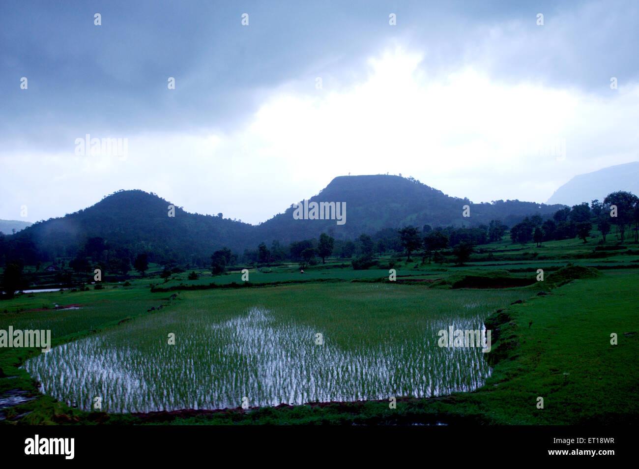 Paesaggio Bhandardara Maharashtra India Asia Immagini Stock