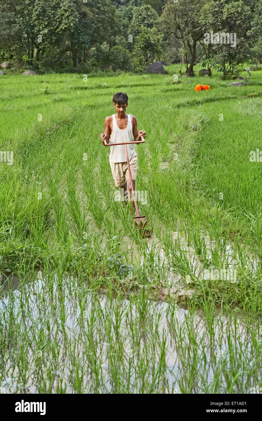 Gioventù rurale mediante operazioni di diserbatura implementare in risaia socio economica iniziativa da parte Immagini Stock