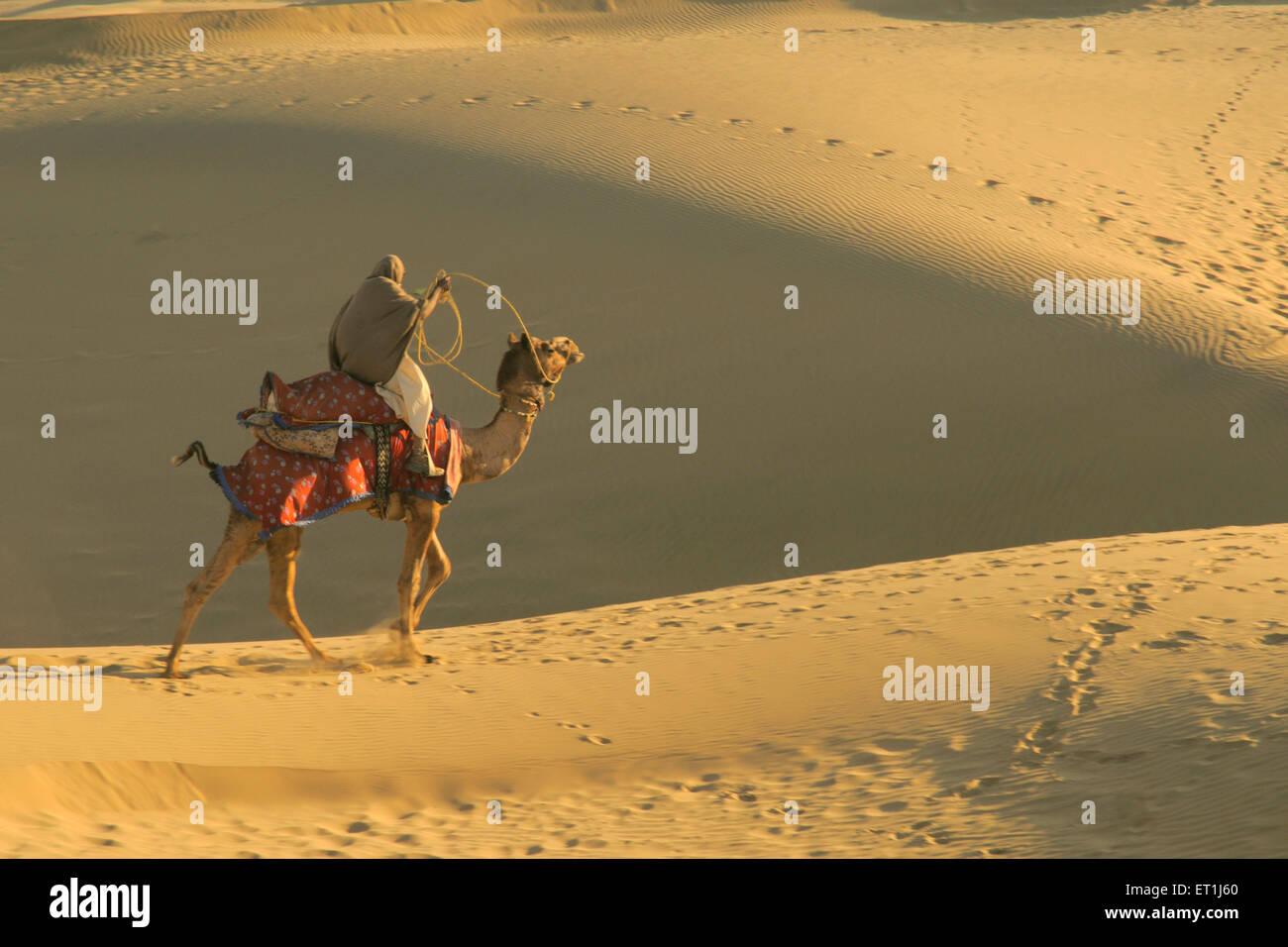 Proprietario seduto sul cammello rendendo runaway sulle morbide dune di sabbia a Sam ; Jaisalmer ; Rajasthan ; India Immagini Stock