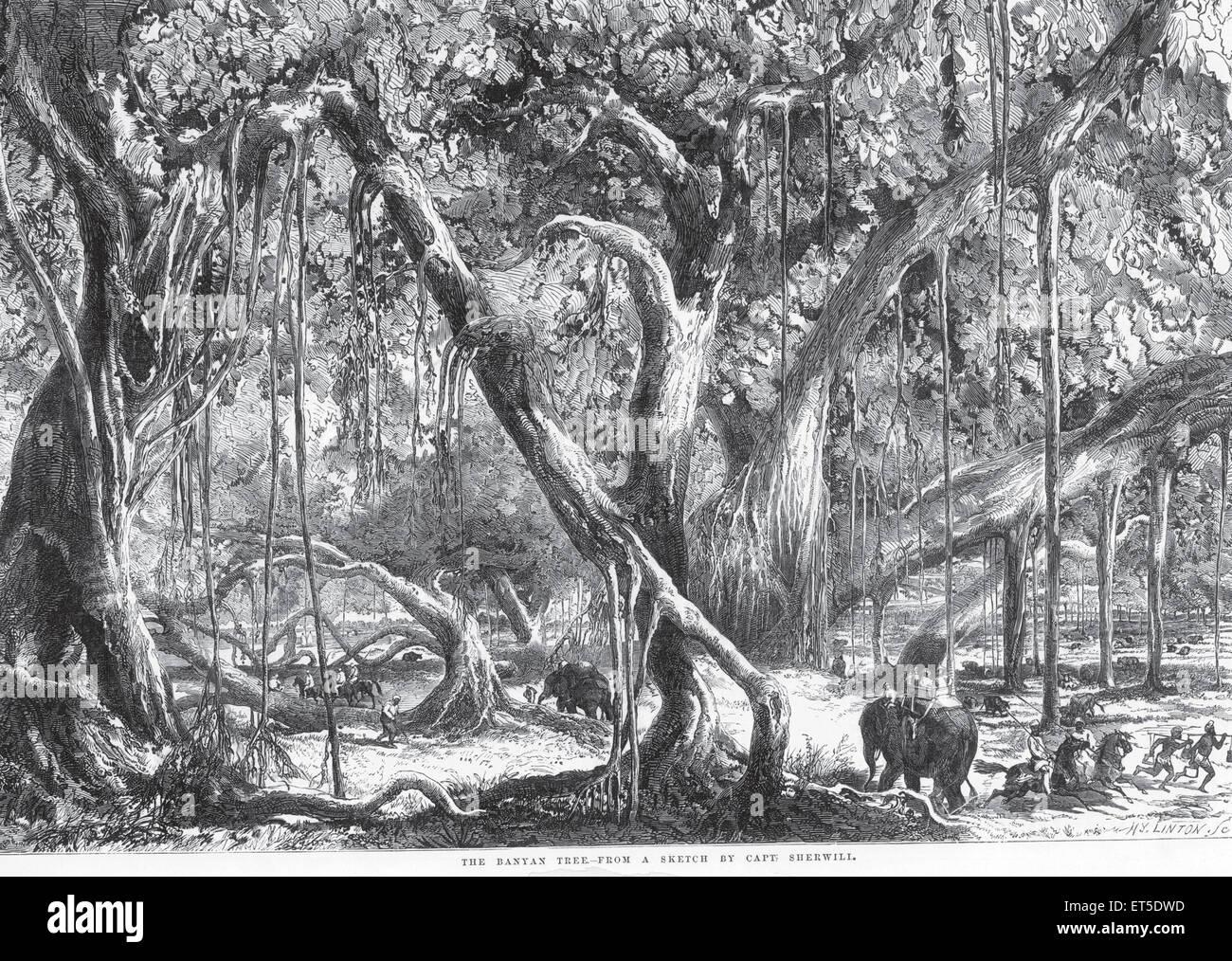 Viaggi e trasporti banyan tree ; India Immagini Stock
