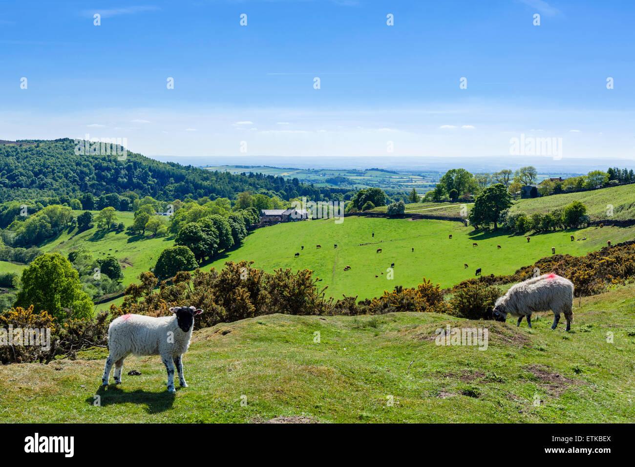 North York Moors campagna, Osmotherley, vicino a Northallerton, North Yorkshire, Inghilterra, Regno Unito Immagini Stock