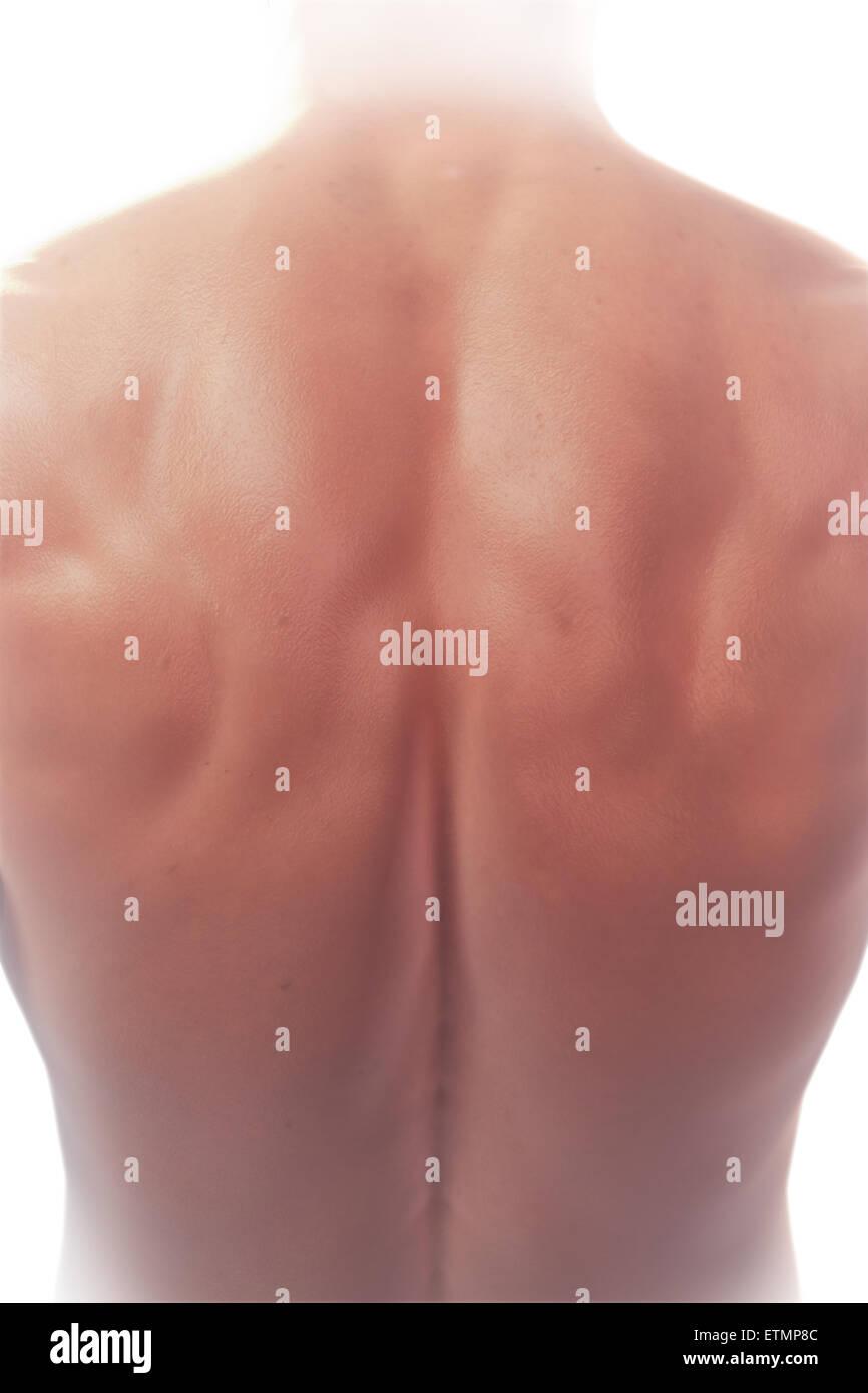 Illustrazione che mostra la superficie anatomia della schiena. Immagini Stock