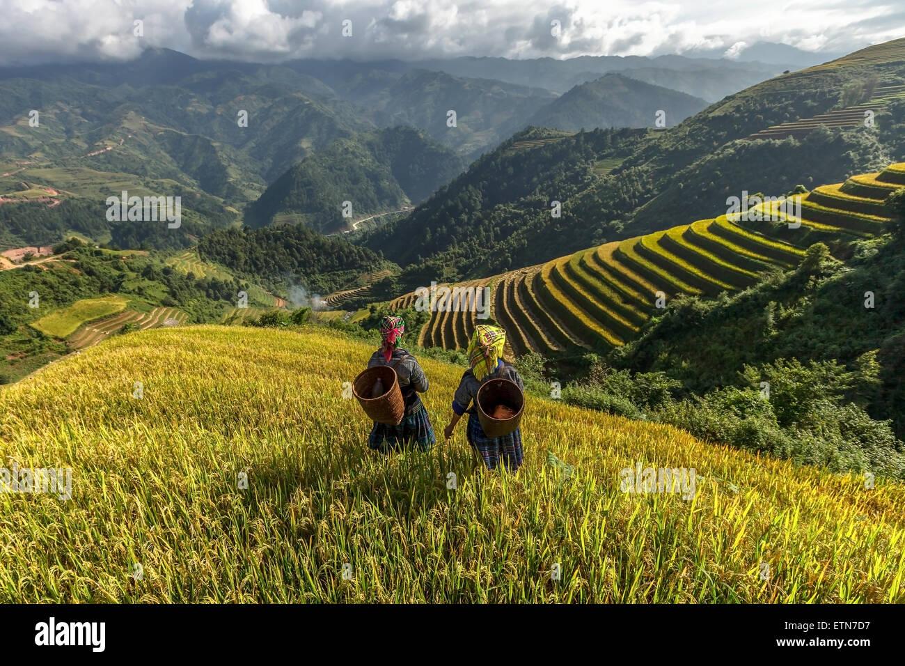 Due donne su campi di riso terrazzati, Mu Cang Chai, YenBai, Vietnam Immagini Stock