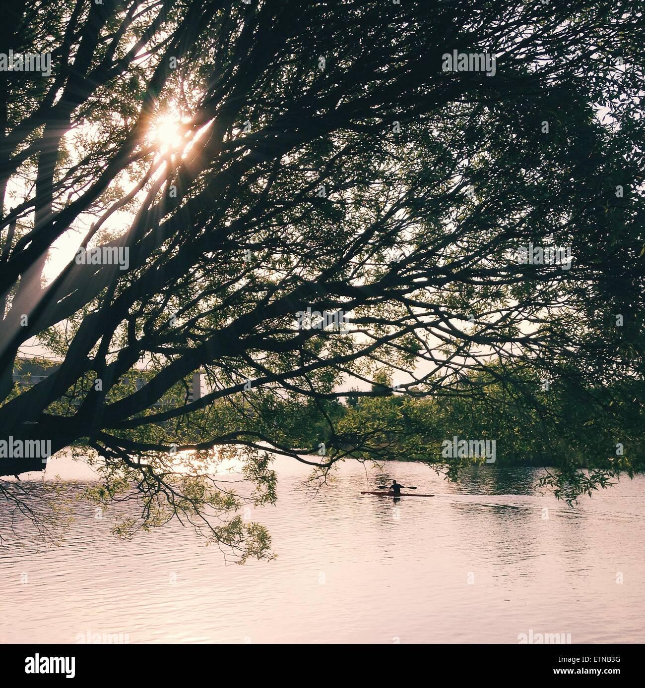 Vogatore in un lago Immagini Stock