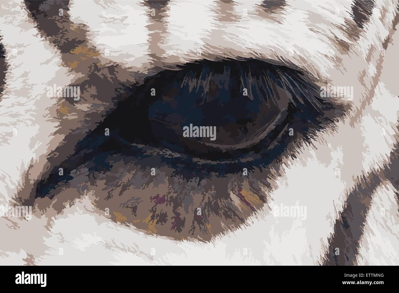 Illustrazione Vettoriale di zebra occhio. La pittura ad olio di stile. Immagini Stock