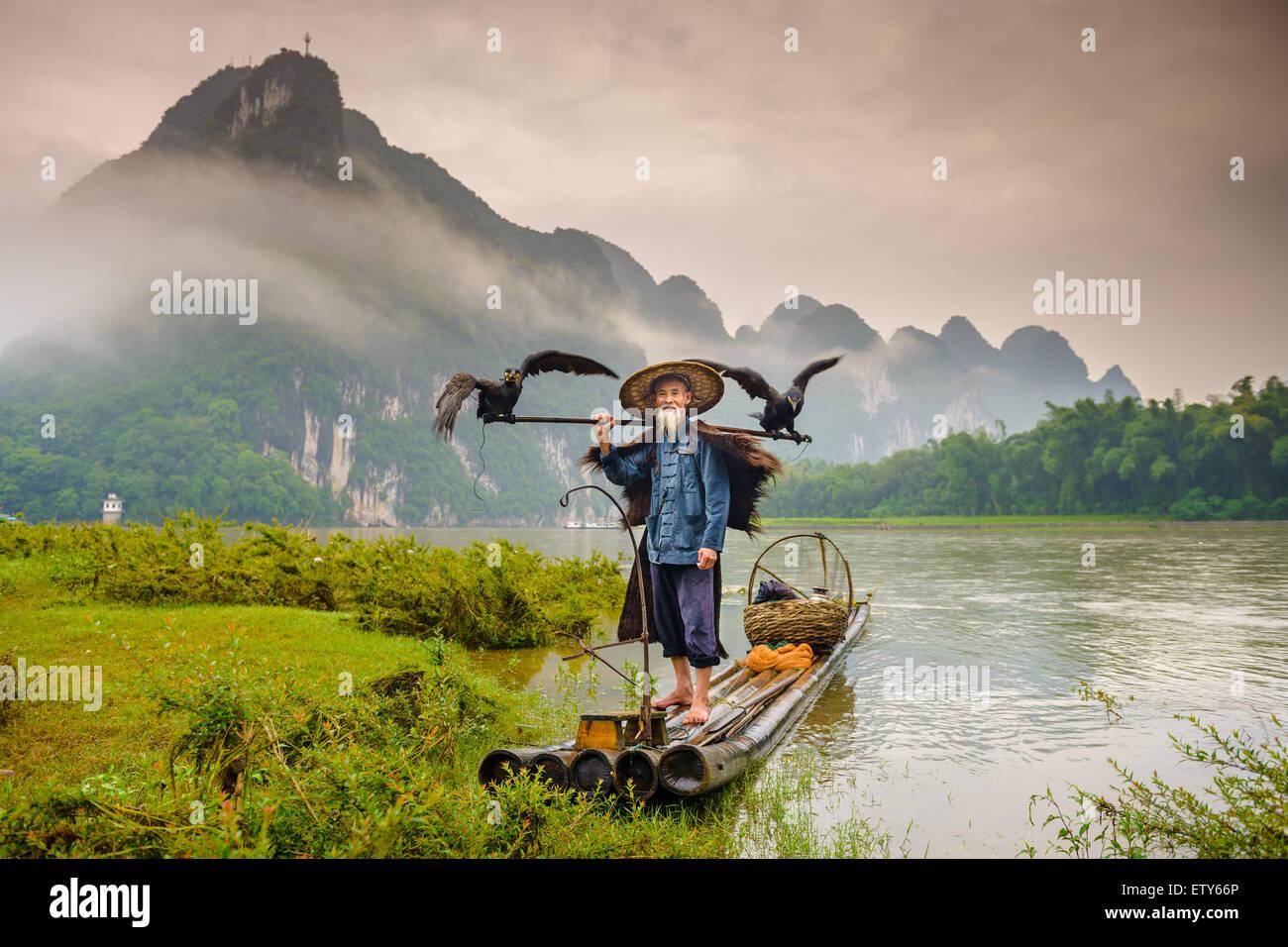 Cormorano pescatore e i suoi uccelli sul fiume Li in Yangshuo, Guangxi, Cina. Immagini Stock