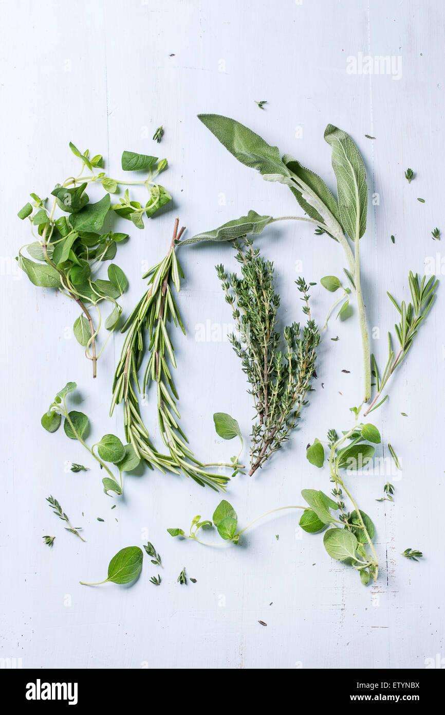 Assortimento di erbe fresche di timo, rosmarino, salvia e origano sulla luce blu sullo sfondo di legno. Vista superiore Immagini Stock