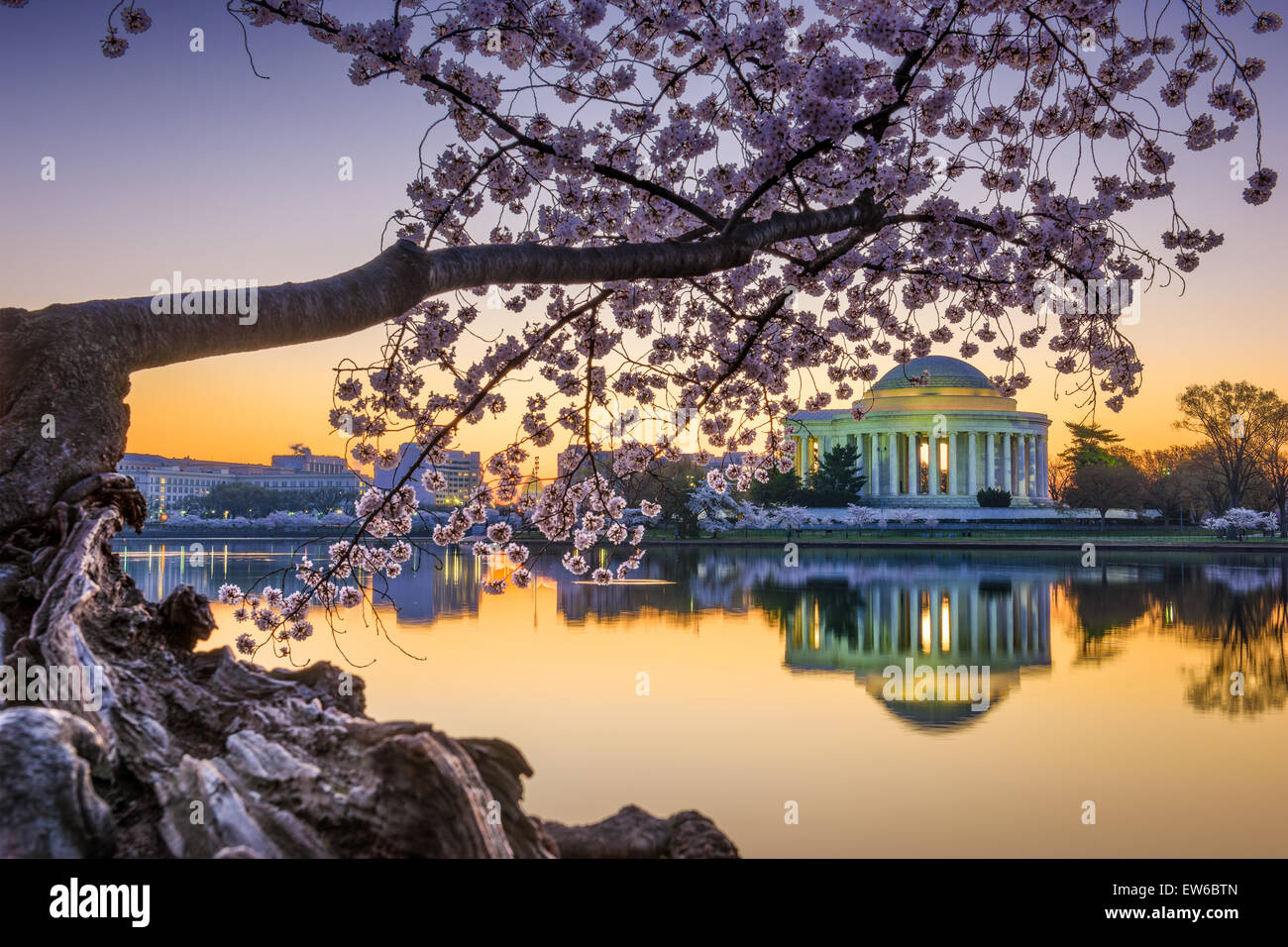 Washington, DC al Jefferson Memorial durante la primavera. Immagini Stock