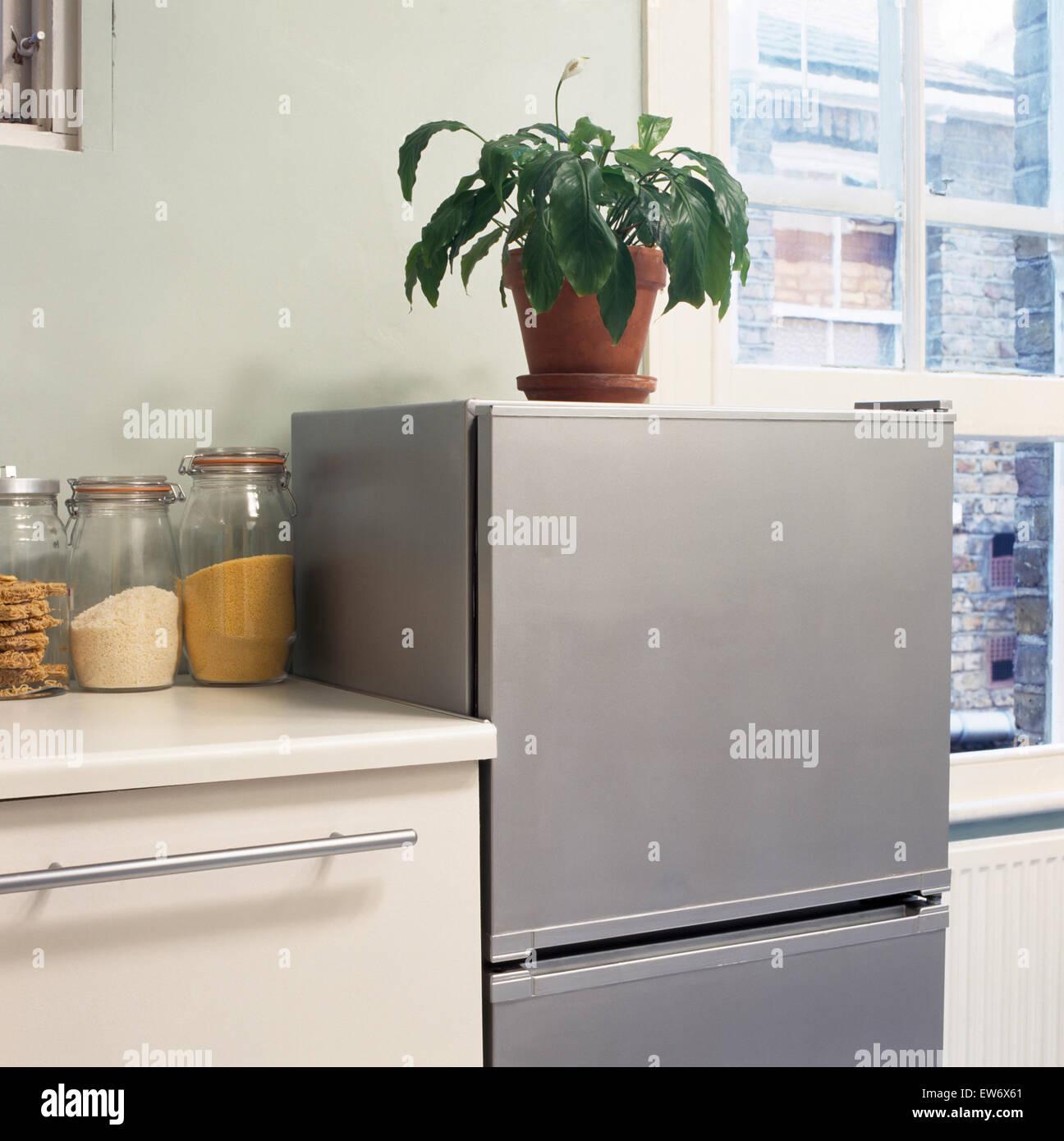 Houseplant sulla sommità del frigorifero con congelatore in economia di cucina di stile Immagini Stock