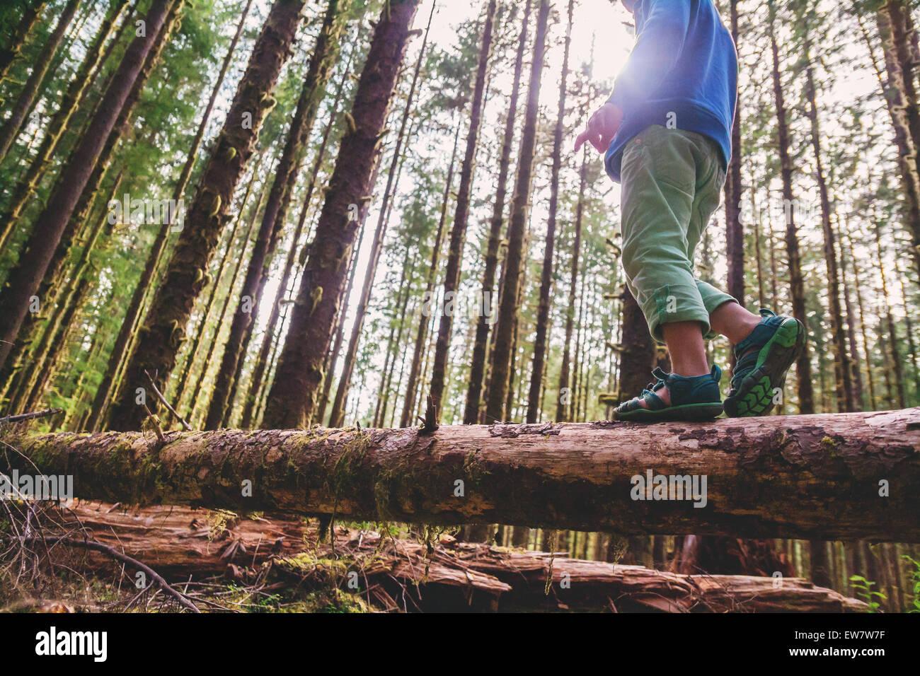 Basso angolo di visione di un ragazzo di camminare su un tronco di albero Immagini Stock