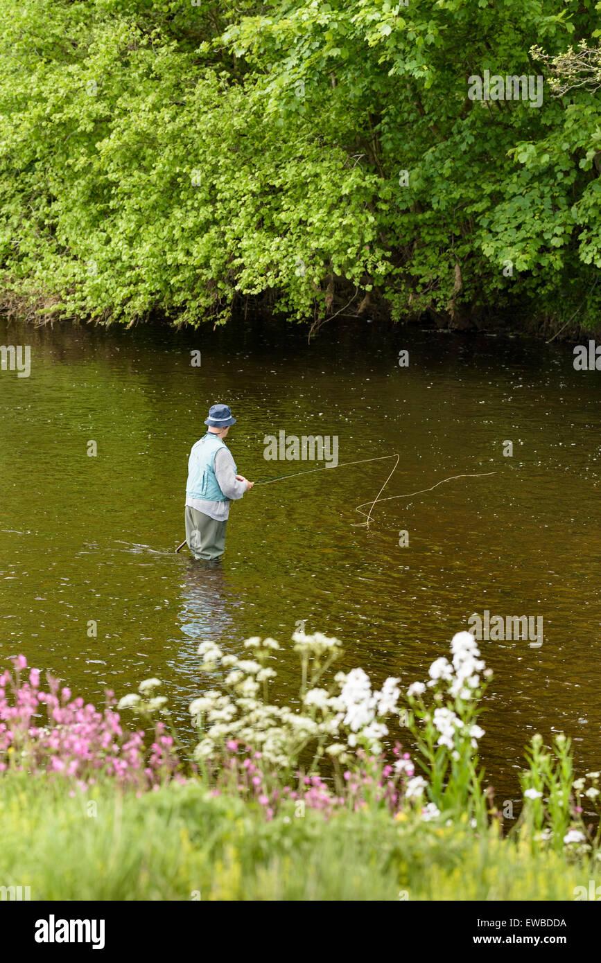 Uomo anziano di pesca a mosca nel fiume Wharf, vicino a Bolton Abbey, North Yorkshire, Inghilterra. Immagini Stock