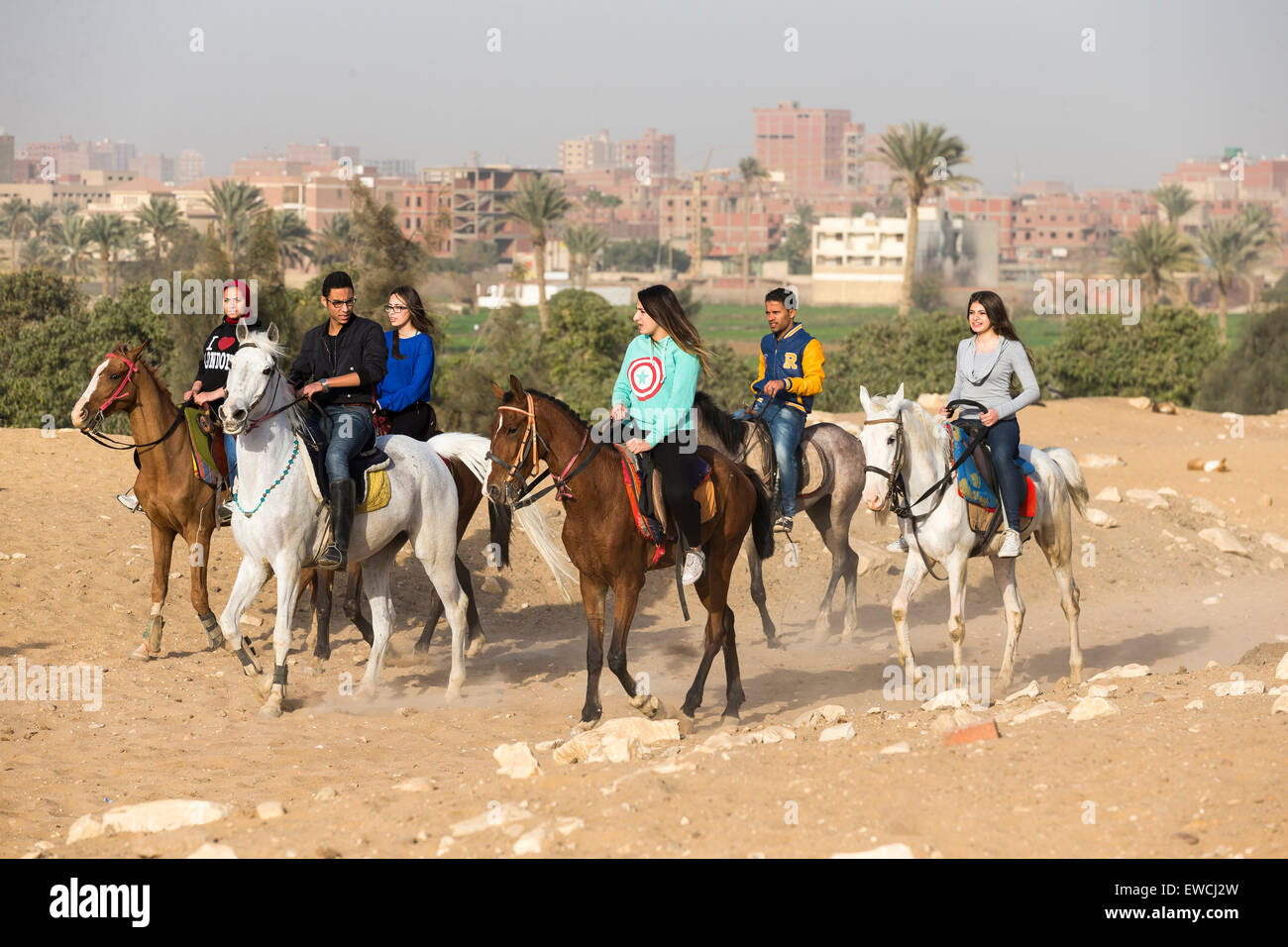 Arabian Horse. Un gruppo di ragazzi a cavallo nel deserto. Kairo, Egitto Immagini Stock