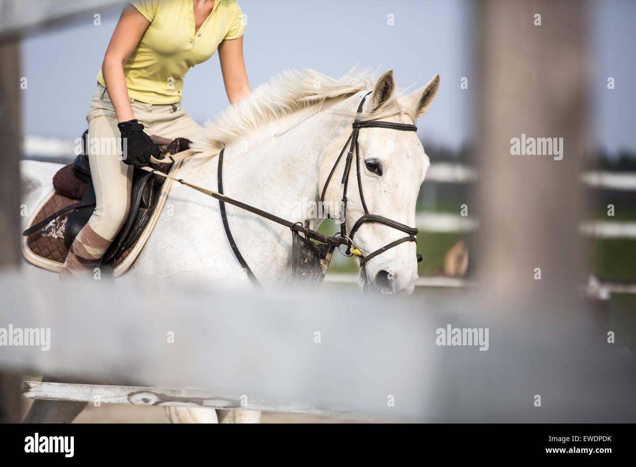 Giovane donna Show Jumping con cavallo Immagini Stock