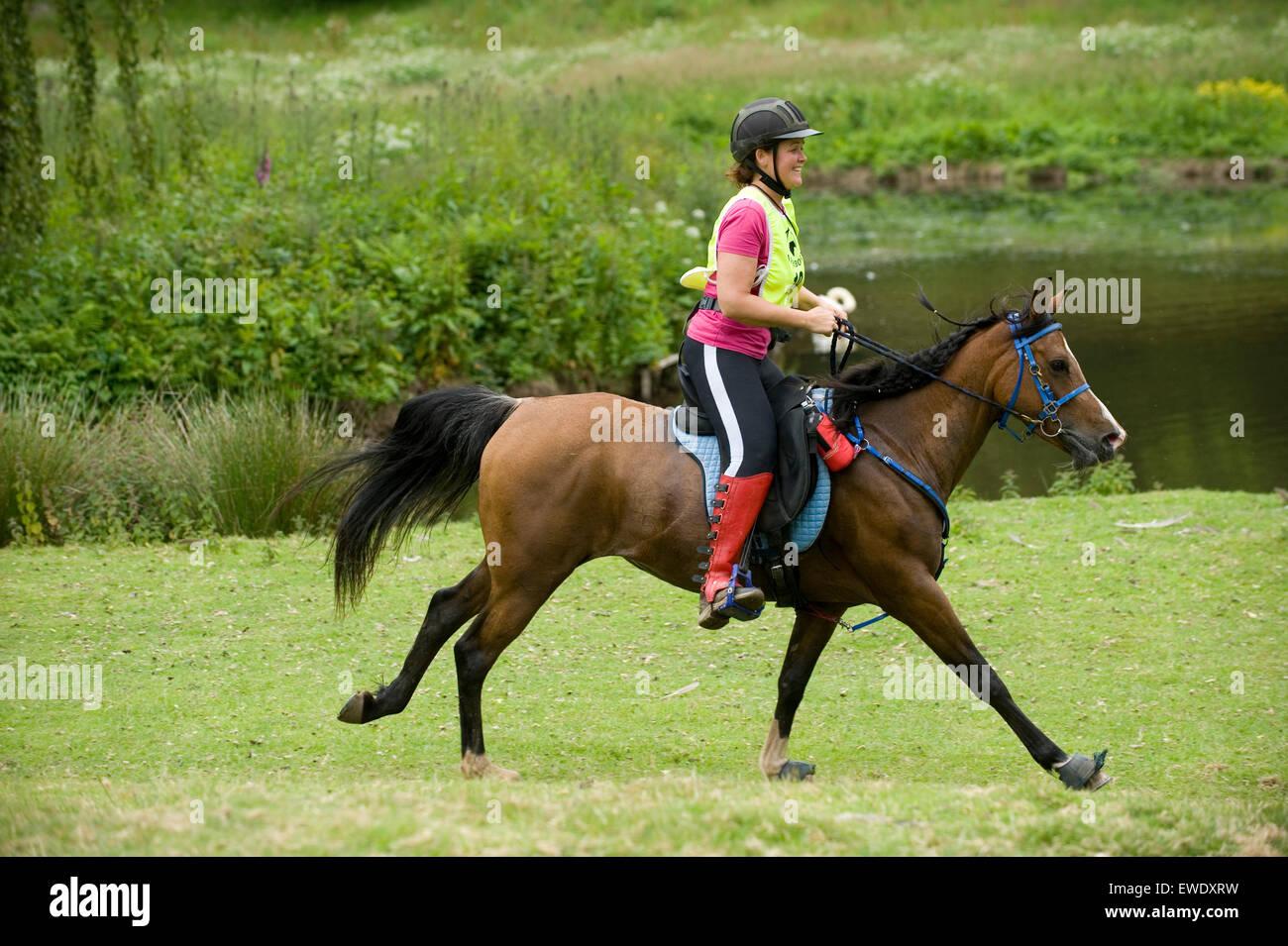 Endurance corsa di cavalli Immagini Stock