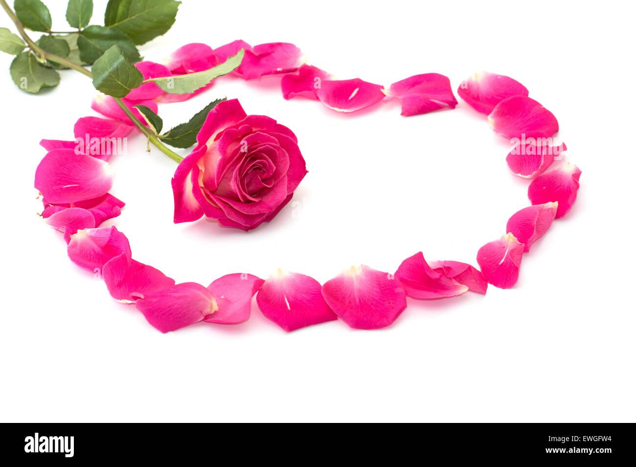 Fiore di un rosa rosa al centro del cuore da lobi Immagini Stock