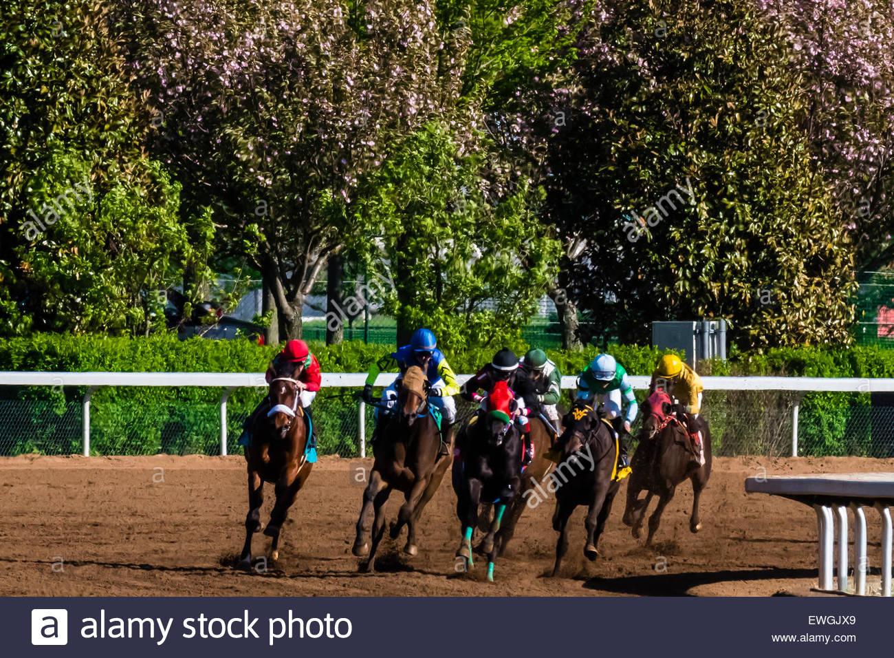 Corse di cavalli sul lato sporco della pista a Keeneland Racecourse, Lexington, Kentucky negli Stati Uniti. Immagini Stock
