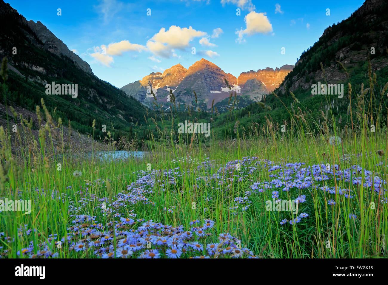 Maroon Bells e fiori selvatici, White River National Forest, Aspen Colorado, STATI UNITI D'AMERICA Immagini Stock