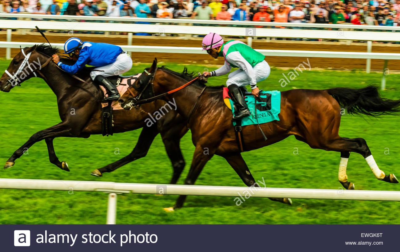 Corse di cavalli sul manto erboso via a Keeneland Racecourse, Lexington, Kentucky negli Stati Uniti. Immagini Stock