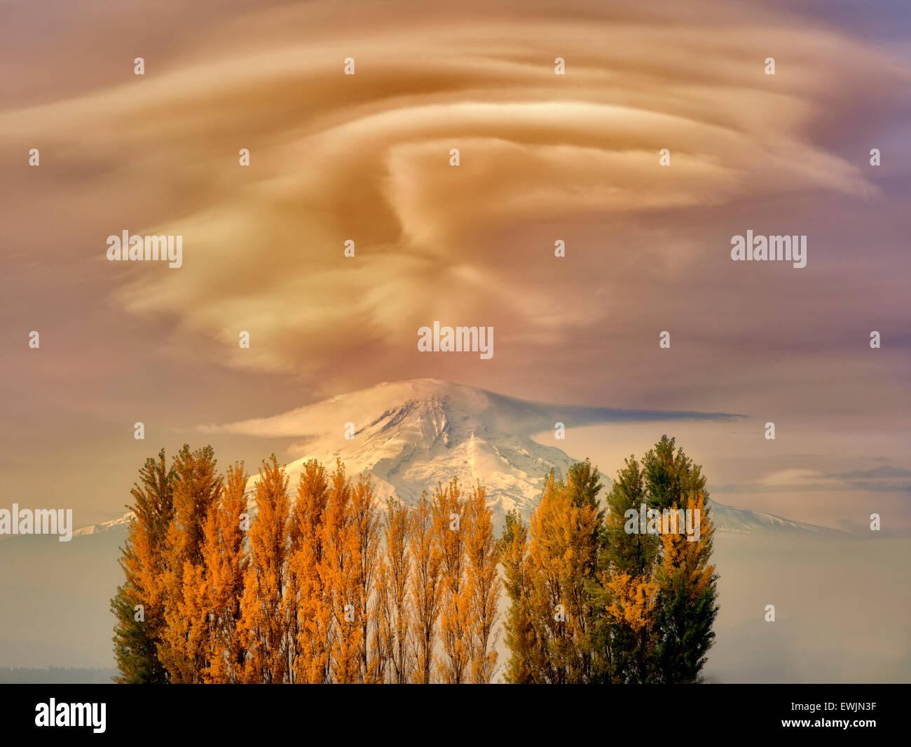 Mt. Cofano e caduta pioppi neri americani colorati alberi. La Columbia River Gorge Natioanl Scenic Area, Washington Immagini Stock