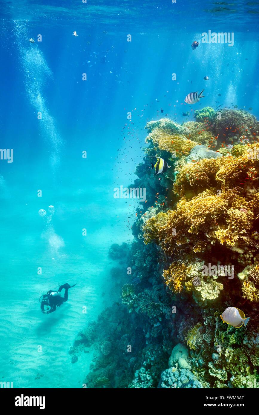 Singolo subacqueo, Marsa Alam Reef, Mar Rosso, Egitto Immagini Stock