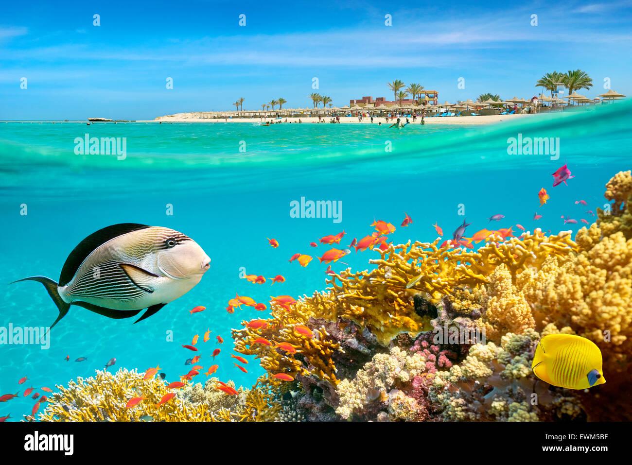 Mar Rosso, Egitto - vista subacquea a pesci e barriera corallina, Marsa Alam Immagini Stock