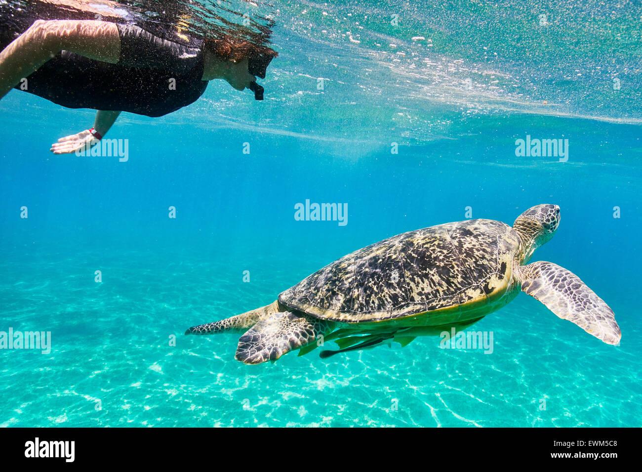 Marsa Alam - donna snorkeling vicino alla tartaruga di mare, Mar Rosso, Egitto Immagini Stock
