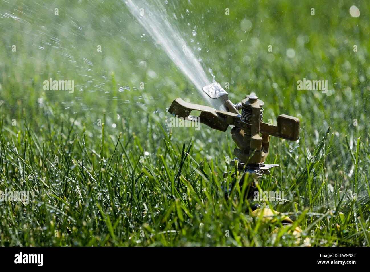 Erba Di Sprinkler Innaffiamento Automatico
