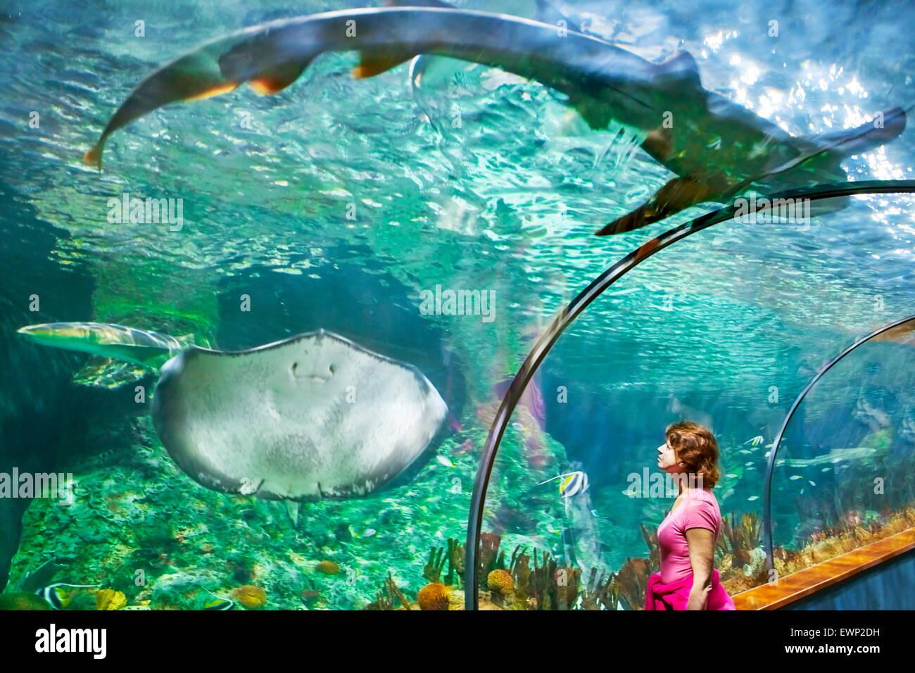 Lo squalo e stingray, acquario in Loro Parque, Puerto de la Cruz, Tenerife, Isole Canarie, Spagna Foto Stock