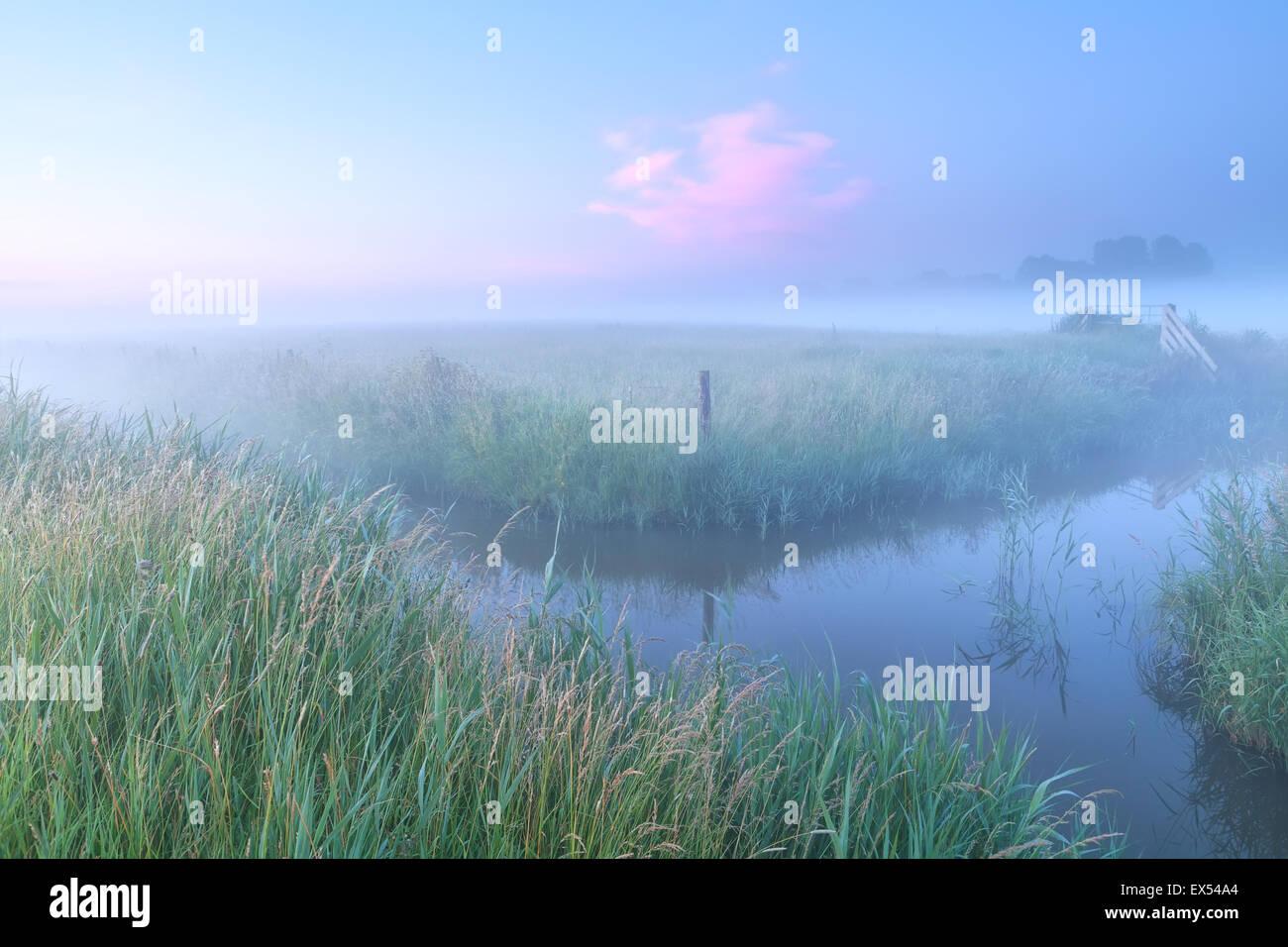Terreni agricoli olandese con il fiume in foggy sunrise Immagini Stock