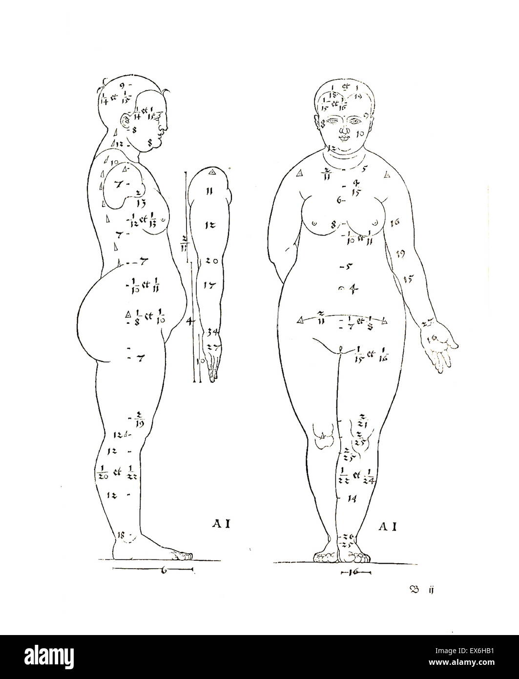 Illustrazione anatomica da 'Vier Bücher von menschlicher proporzione' ' da Albrecht Dürer Immagini Stock