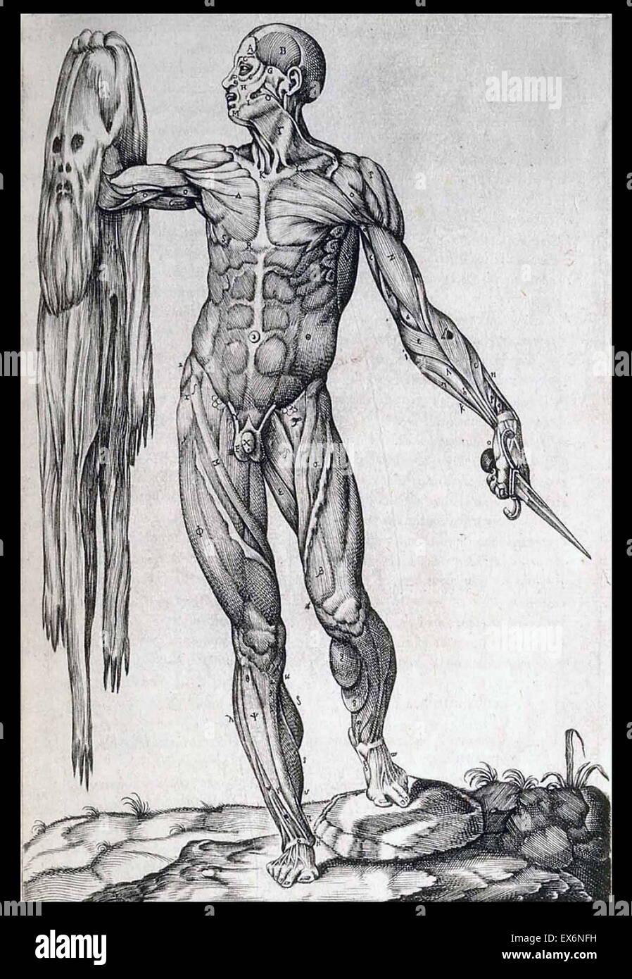 Illustrazione da 'anatomia del corpo humano' Roma, 1559. da Juan Valverde de a Amusco (ca. 1525 - ca. 1588) Immagini Stock
