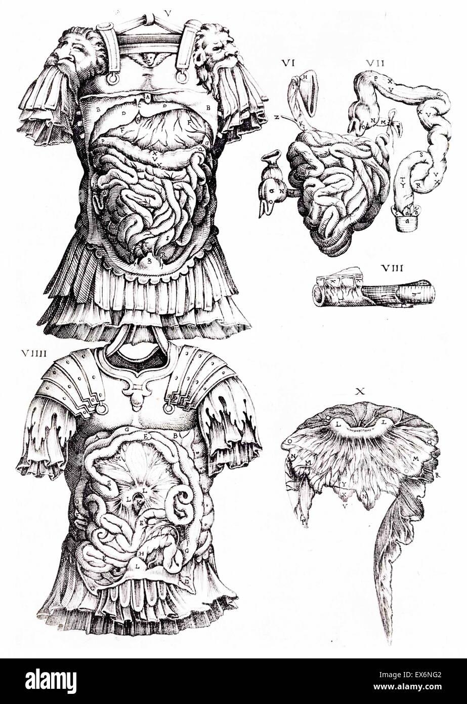 Illustrazione anatomica da 'anatomia del corpo humano' 1559 da Juan Valverde de a Amusco (1525-ca. 1588) Immagini Stock