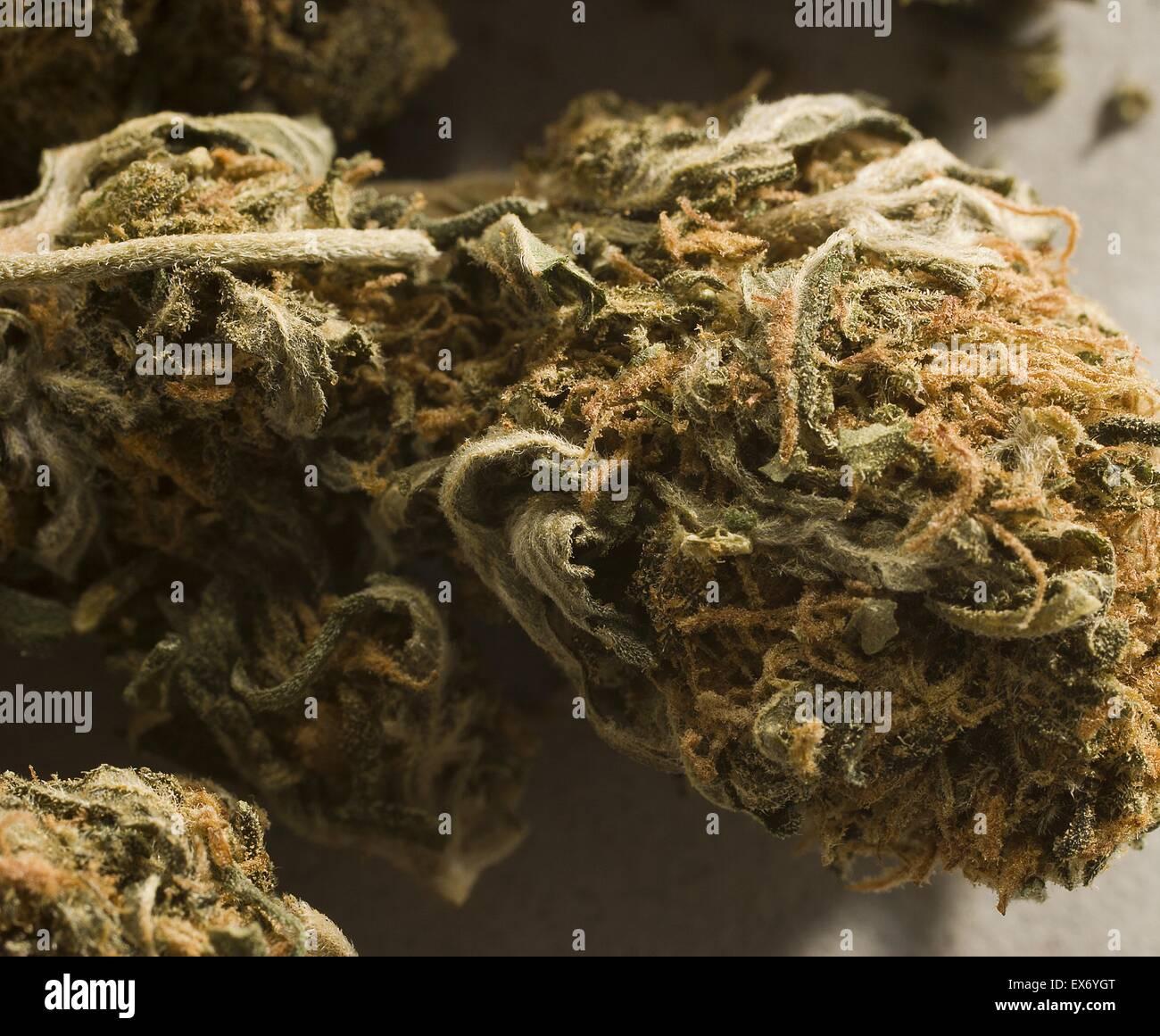 La Cannabis, comunemente conosciuta come marijuana è una droga psicoattiva e come medicina, che possono includere accresciuta umore o euforia, relax e come aumento di appetito. Possibili effetti collaterali includono una diminuzione nella memoria a breve termine, compromissione delle capacità motorie e f Foto Stock