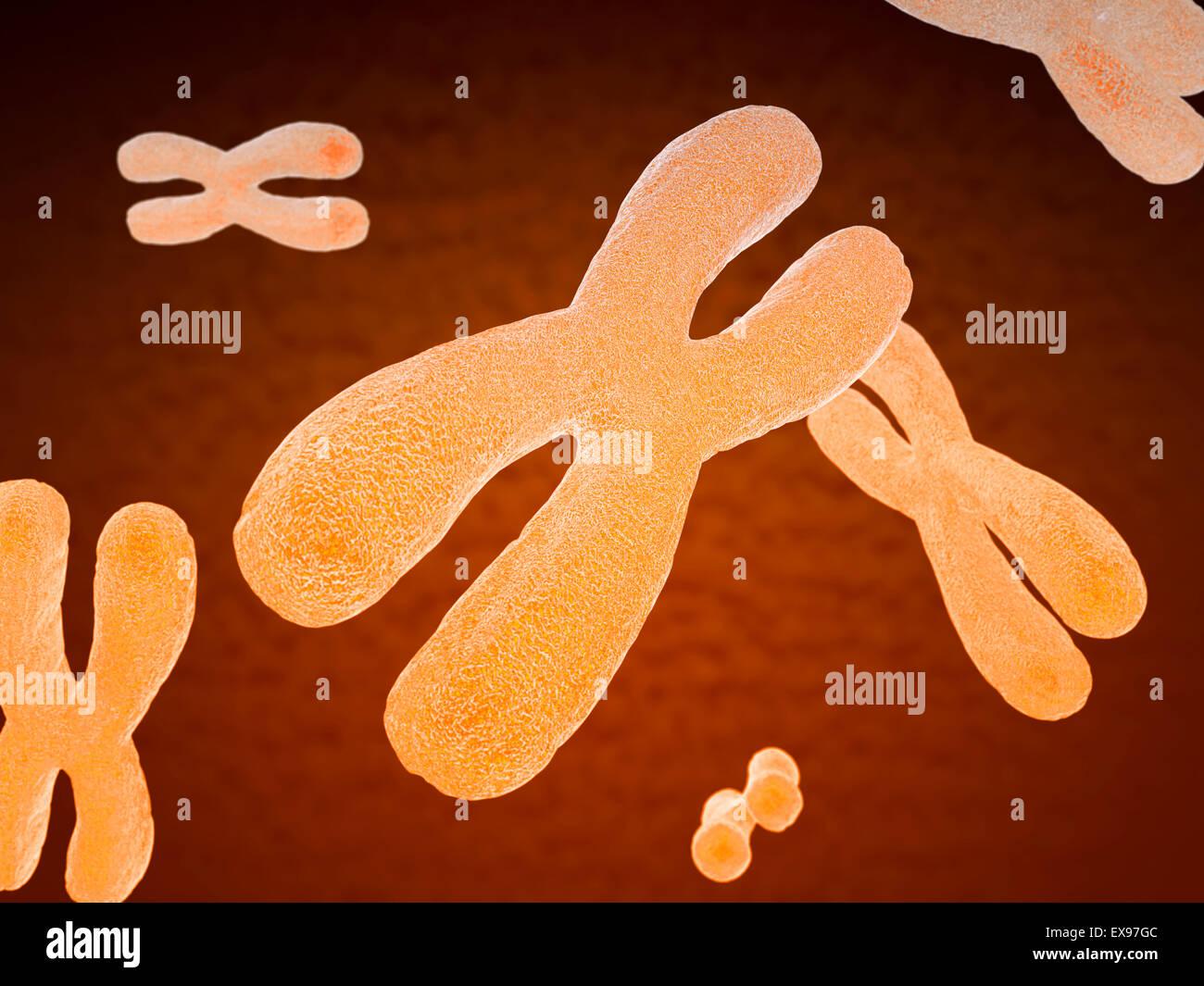 Illustrazione di cromosomi. Immagini Stock